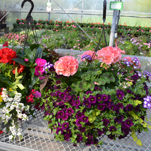 hanging baskets and flowers