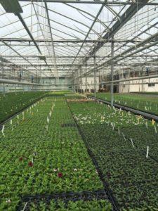 Witzke's Greenhouses Ltd. in Courtice, Ontario