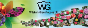 Witzke's Greenhouses Ltd. in Courtice, Ontario