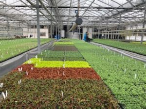 flats of plants in a greenhouse