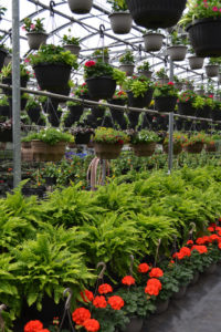 hanging baskets and floor planters